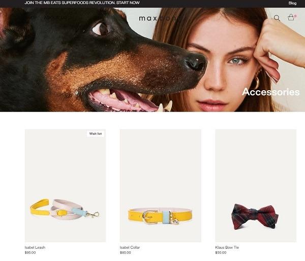 pet dog collar designer example