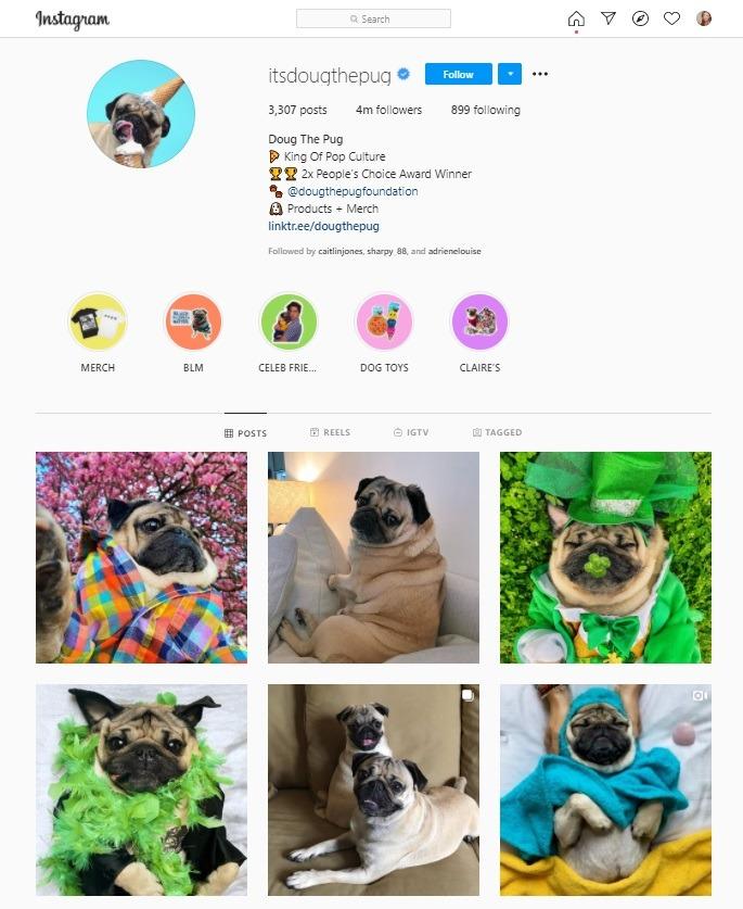 dog influencer Instagram